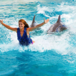 Royal Dolphin Swim Oahu Hawaii