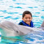 Dolphin Encounter Oahu