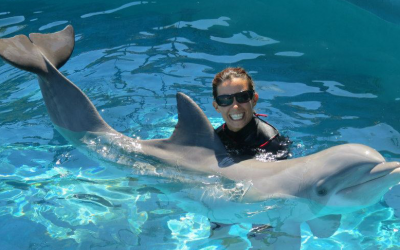 How to Become a Dolphin Trainer on Oahu Hawaii