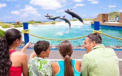 Observer Dolphin Programs in Oahu Hawaii