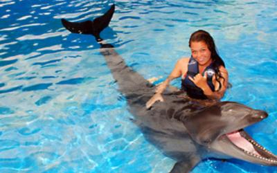 Wholphin Oahu Hawaii