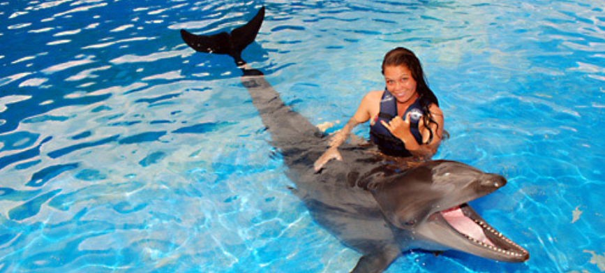 Wholphin Sea Life Park