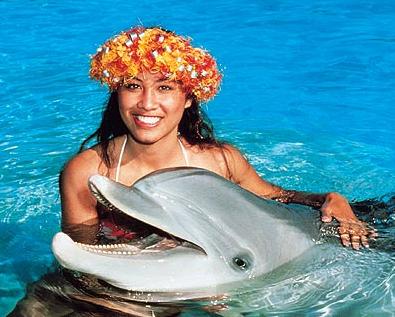 Dolphin Reviews Oahu