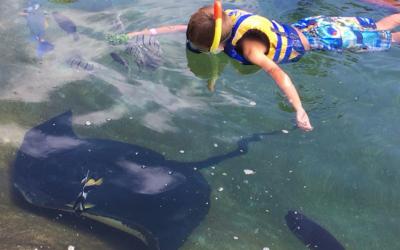 Other Fun Activities at Sea Life Park