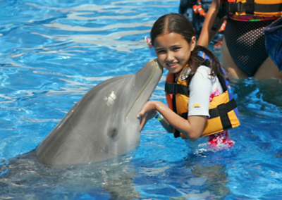 Dolphin Encounter in Oahu