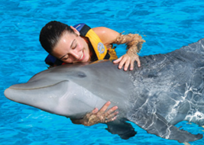 Dolphin Swim Adventure in Oahu Hawaii