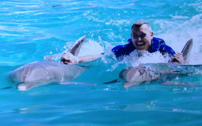 What are the Different Swim with Dolphins Oahu Programs Offered