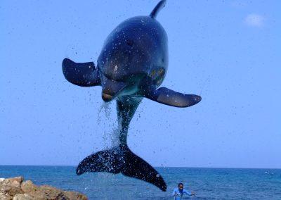swim with dolphins in honolulu