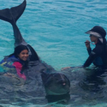 Can you swim with dolphins in Honolulu Hawaii