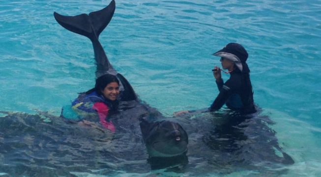 Can You Swim with Dolphins in Honolulu?