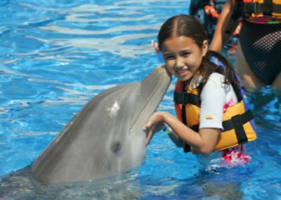 Dolphin Encounter (non-swim) Oahu Hawaii