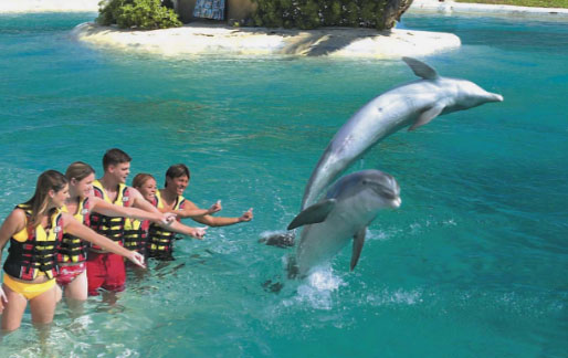 Train your dolphins in Oahu Hawaii