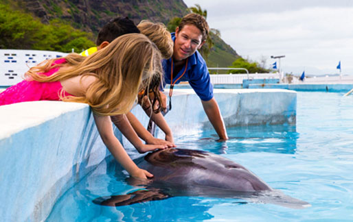 Pet the dolphins in Oahu Hawaii