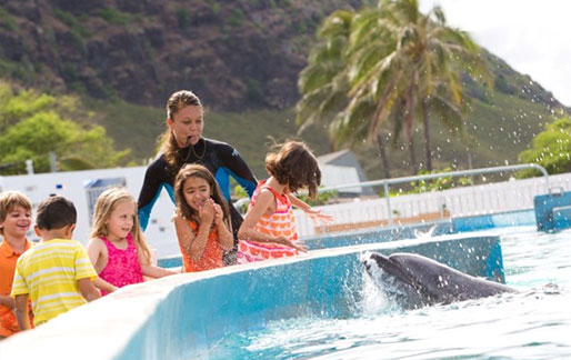 Trainers play with dolphins in Oahu Hawaii