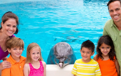 dolphin aloha touch and play
