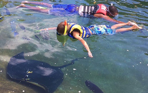 Swim with the Rays Sharks and Fish in Oahu