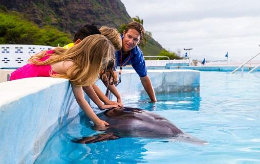 Dolphin Aloha Touch